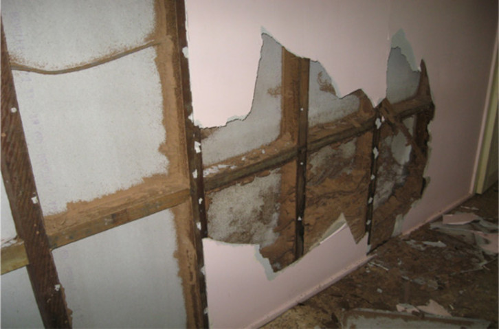 Termite infestation in wall behind plasterboard