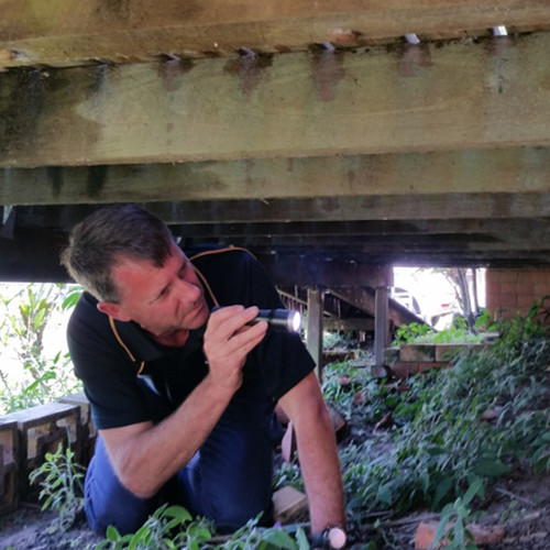 Peter K Sunshine Coast Building and Pest Inspector under house