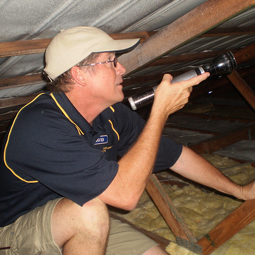 David - brisbane interior house & pest inspector