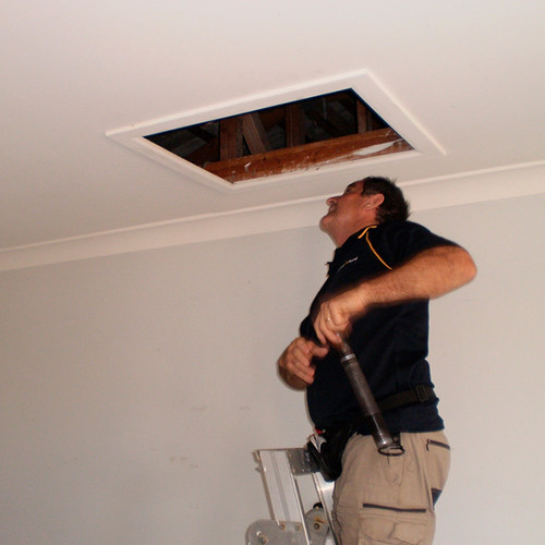 Glenn building pest inspector roof void