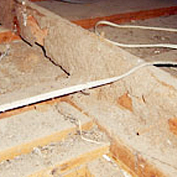 Termite workings and damage to a pitched hardwood roof