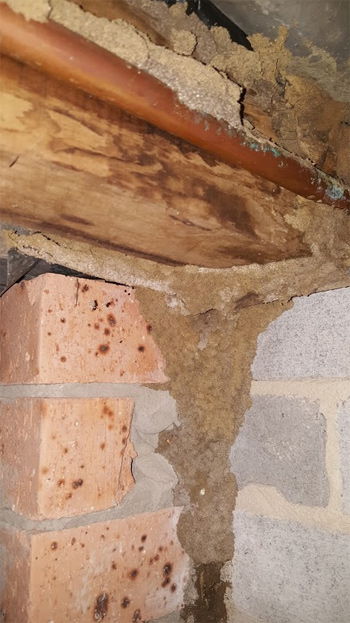 Termite damage found to roof during pest inspection