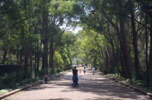 Memorial Avenue, Auburn Botanic Garden