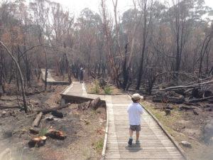 Bushfires St Ives