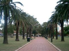 parramatta palms