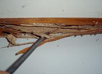 termite inspection 3