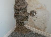 termite inspection 7