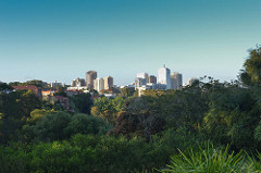 view bellevue hill