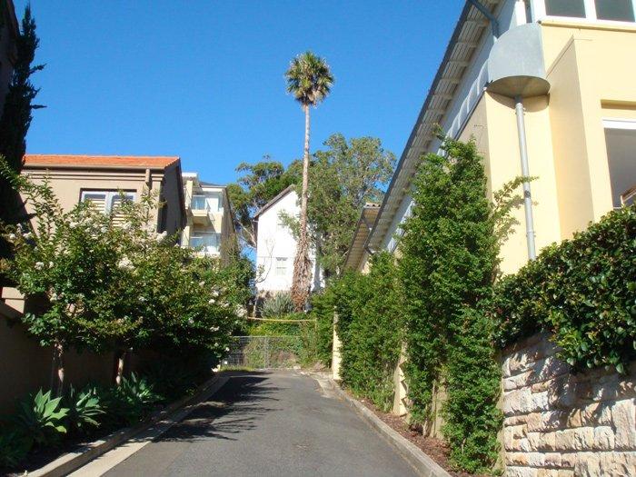 mosman palm tree